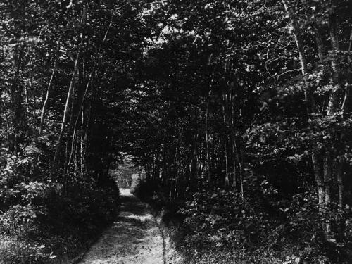 Eugène Cuvelier. Sendero en el bosque, 1850-1860